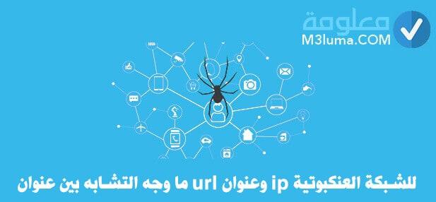 ما وجه التشابه بين عنوان url وعنوان ip للشبكة العنكبوتية
