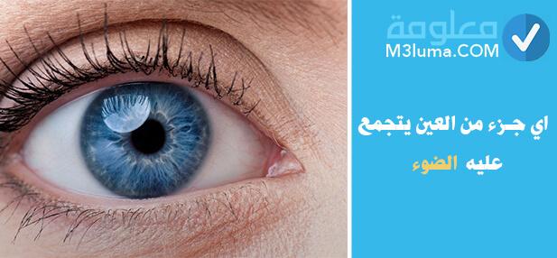 اي جزء من العين يتجمع عليه الضوء